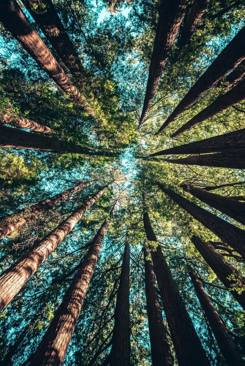 Tree Service Sandy Springs GA -Tall trees
