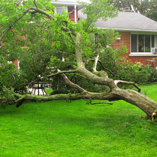 Tree Service Sandy Springs GA - Fallen tree