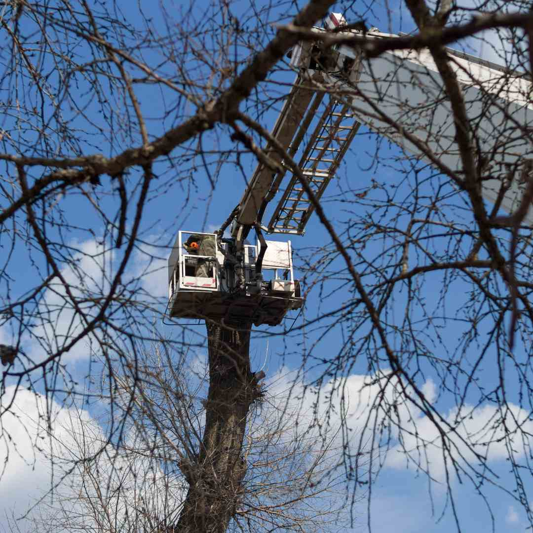Tree Services Sandy Springs GA - Arborist 3