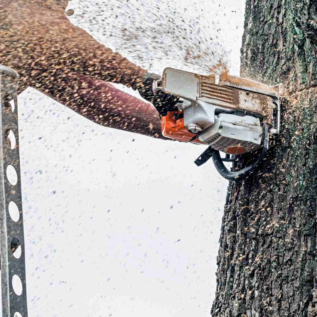 Tree Services Sandy Springs GA -Arborist 5
