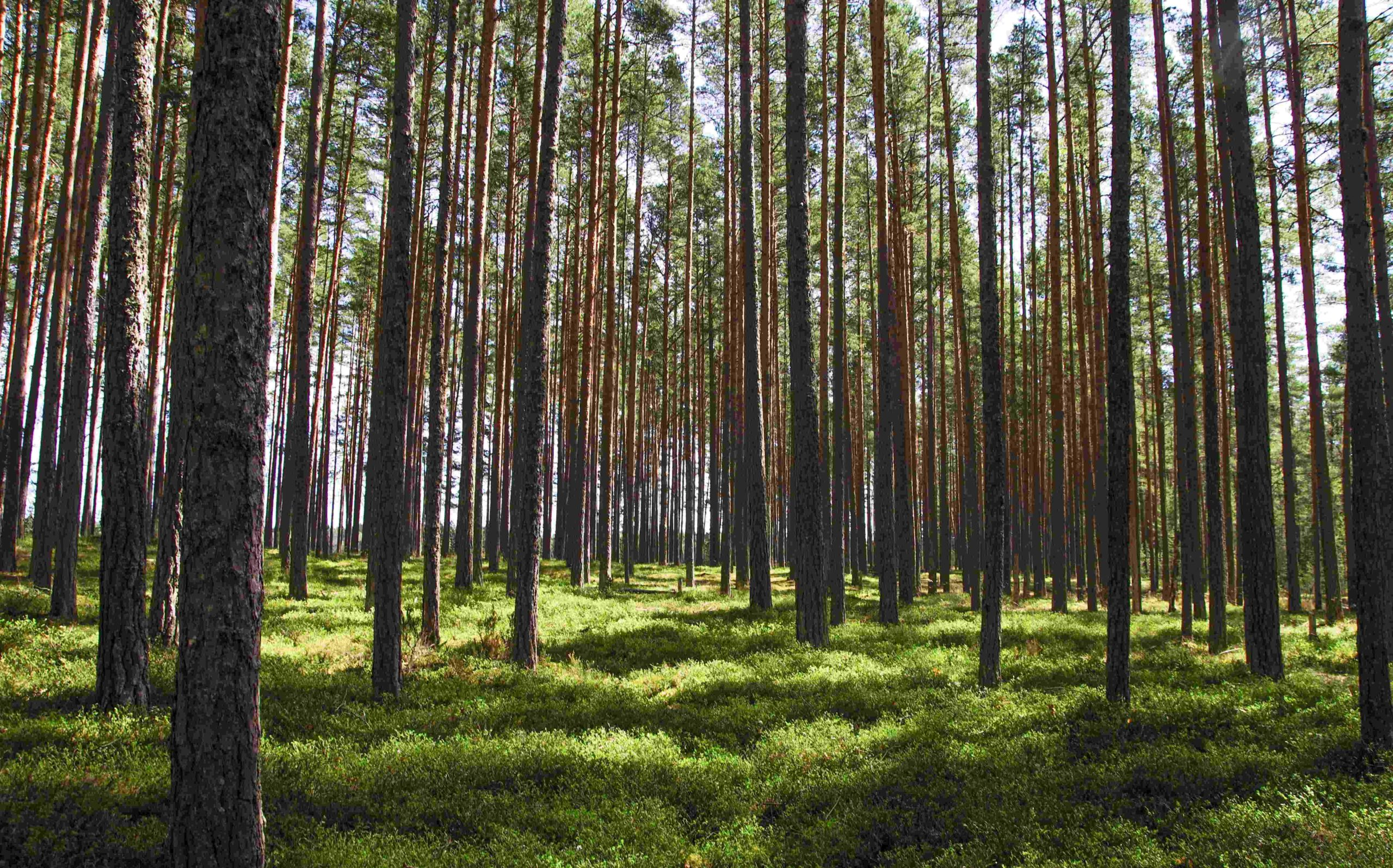 Tree Services Sandy Springs GA- Forest 2