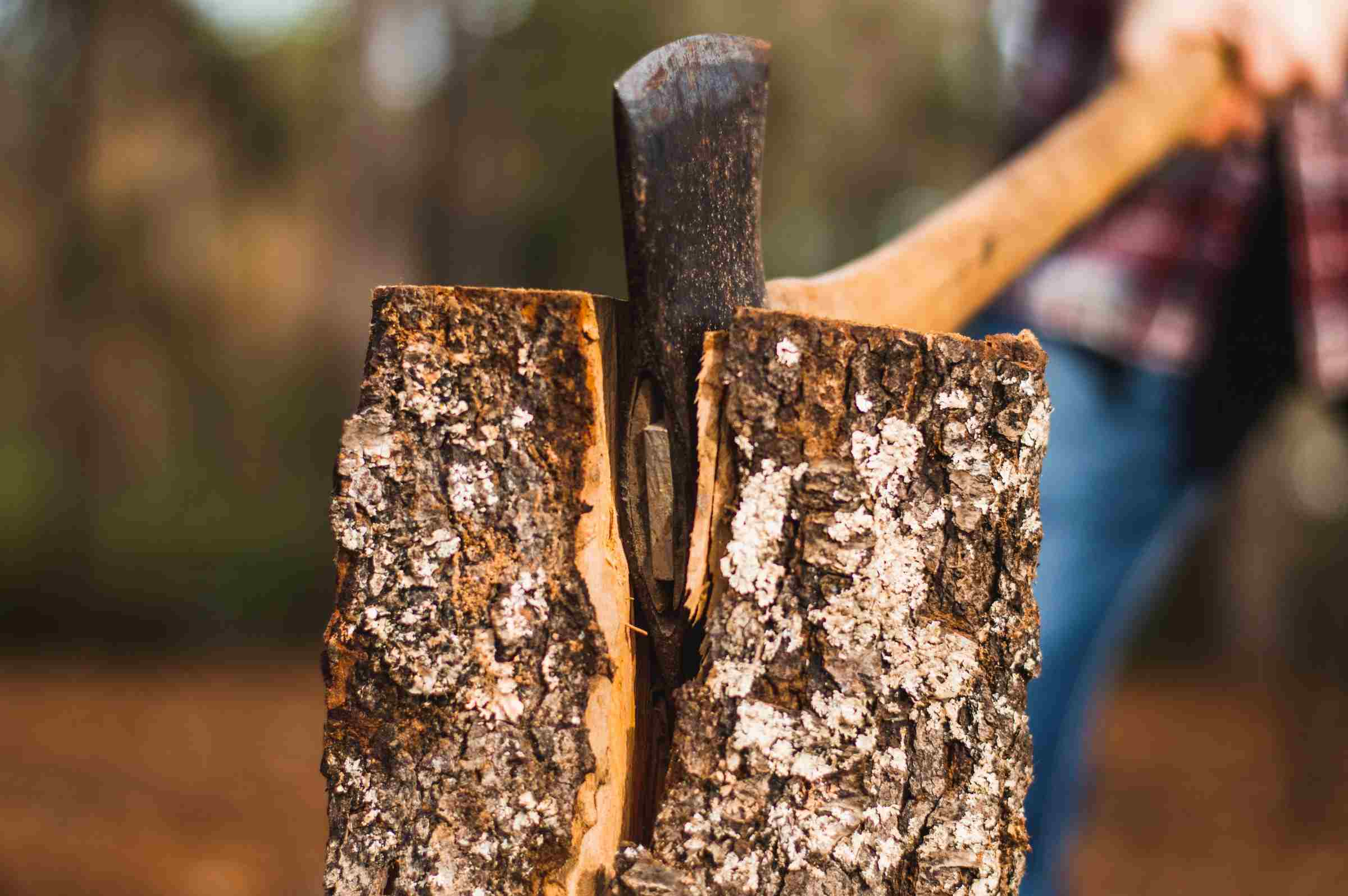 Tree Services Sandy Springs GA -Wood 2
