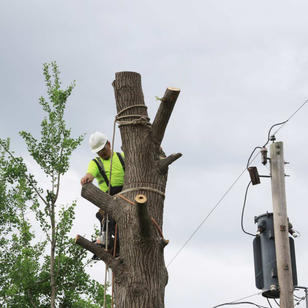 Tree Services Sandy Springs GA - Worker 2