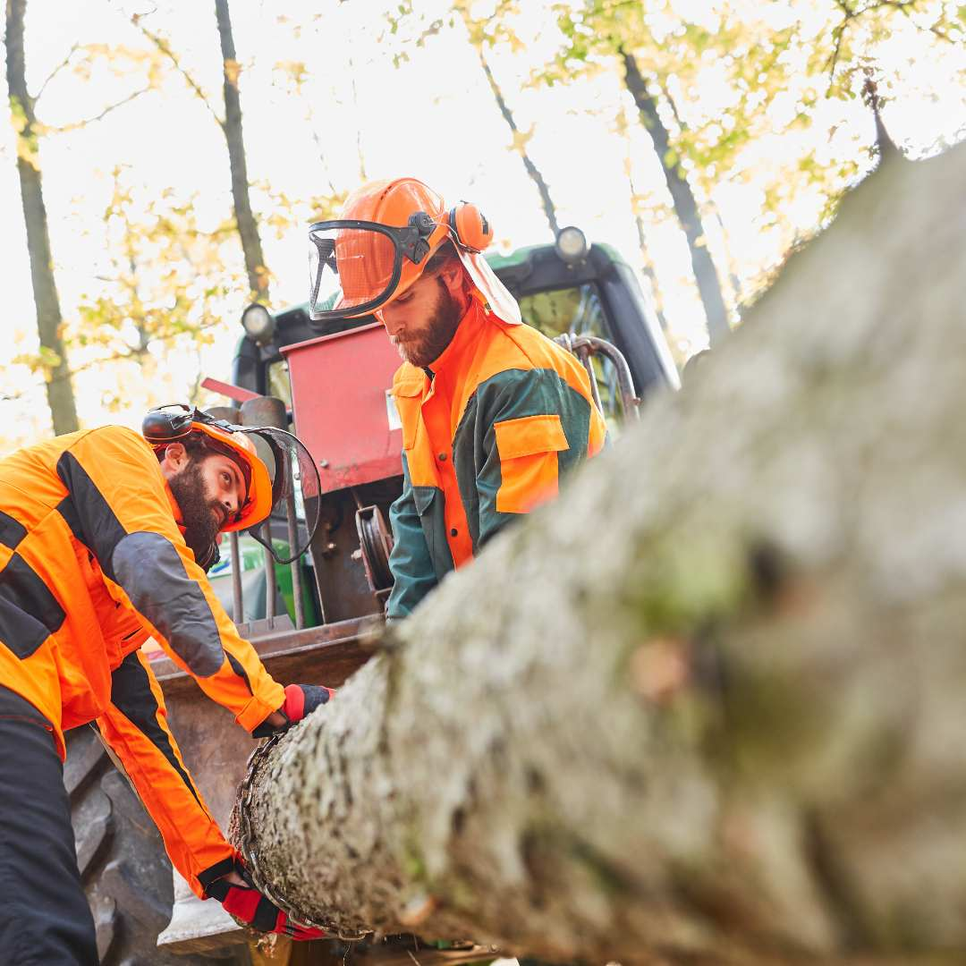 Tree Services Sandy Springs GA - Worker 3