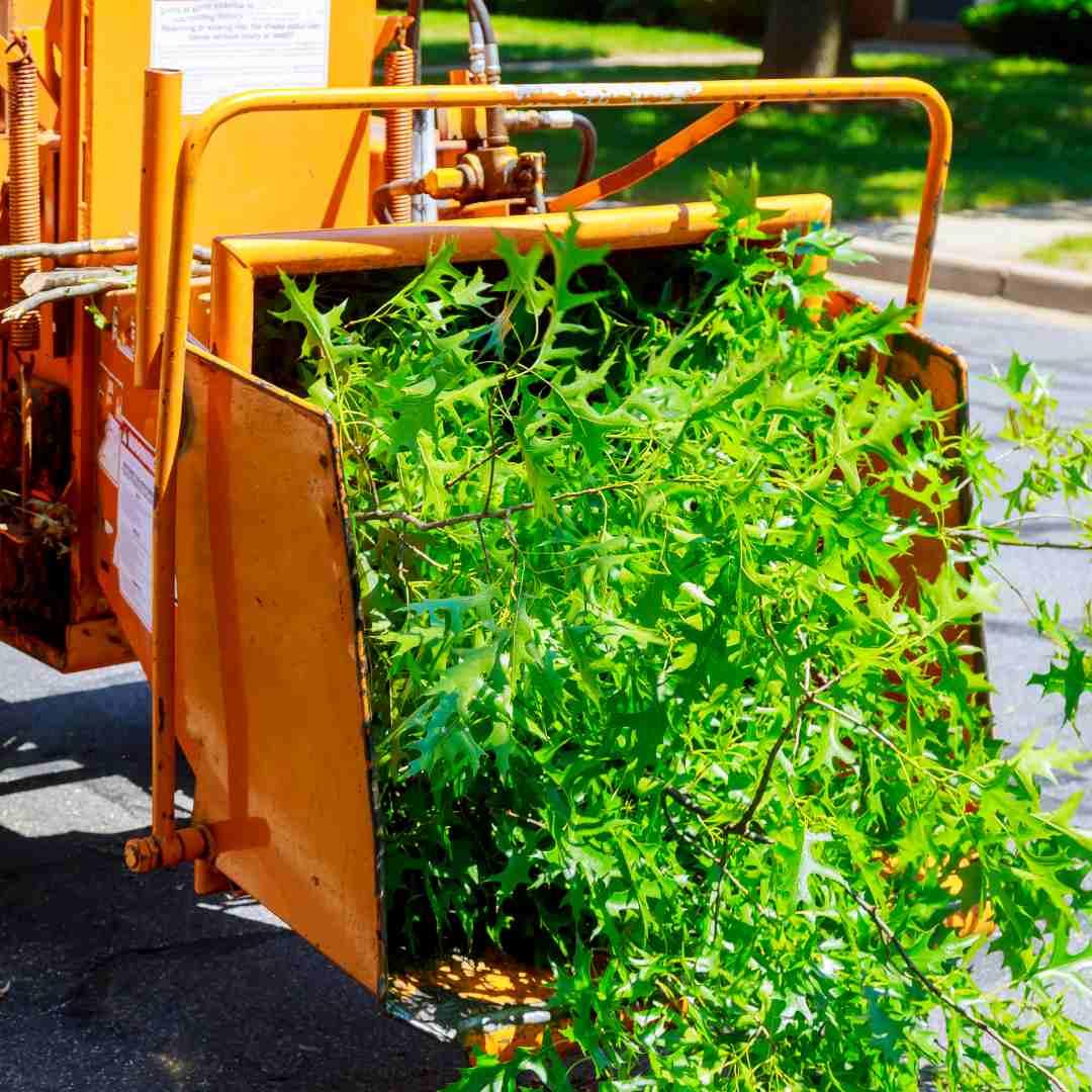 Tree Services Sandy Springs GA - grinder