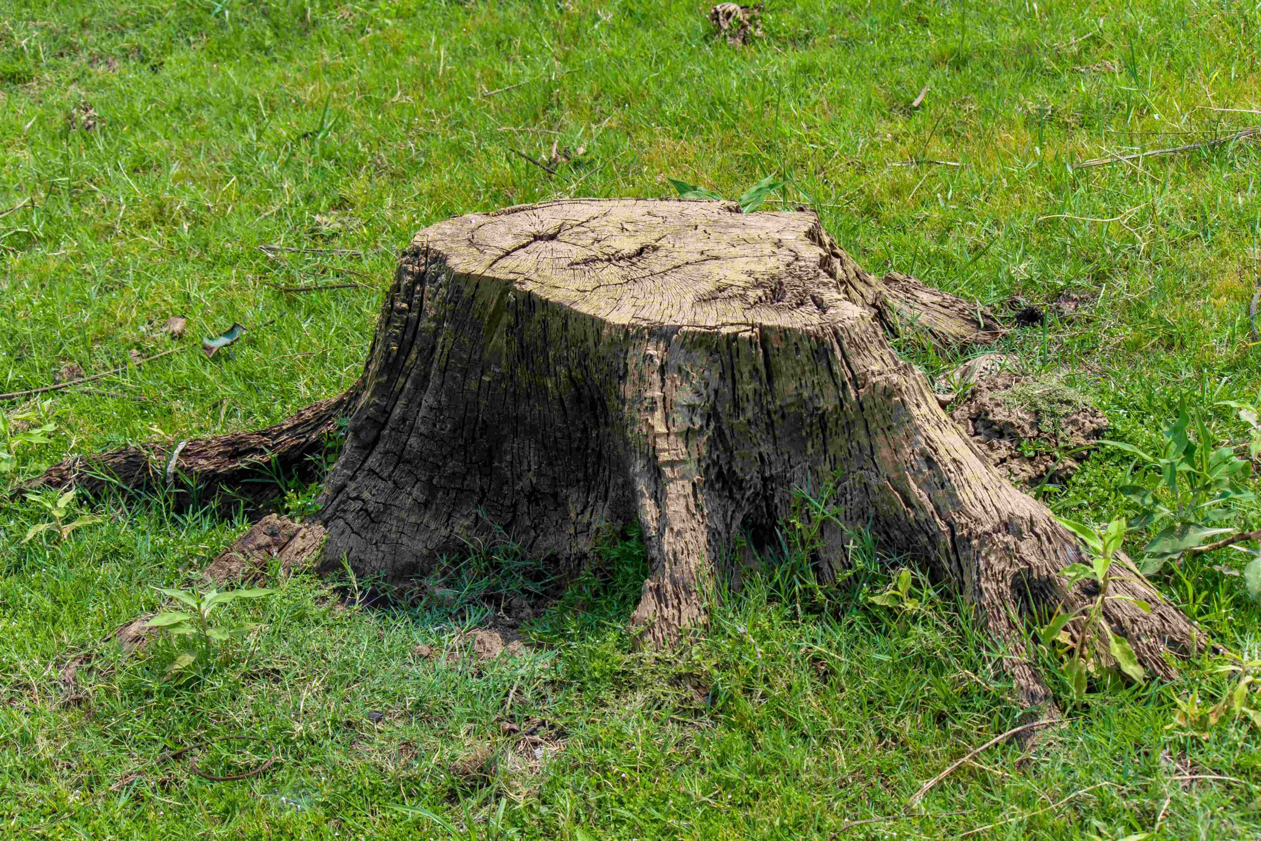 Tree Services Sandy Springs GA - stump